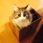 猫?根っこ?いいえ猫ですネッコロです/ネッコロ加速研究所
