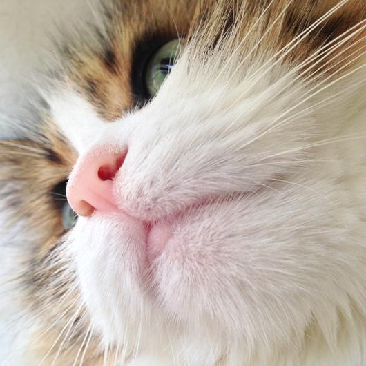 控えめに言って解せぬと秋の猫/解せない様子でも蒲田ちゃんみたいでかわいいよ!