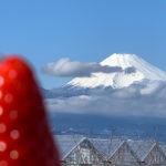静岡で聖地巡礼してきたよ/紅ほっぺをめぐる東京発着日帰りの旅!