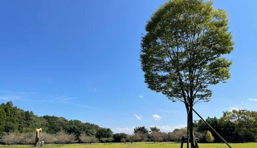 秋彼岸包み包まれ振り振られ/DIC川村記念美術館「クリストとジャンヌ゠クロード―包む、覆う、積み上げる」