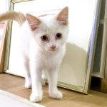 子猫を見てきただけなのに/「人は突然猫を飼う」カサの名言連発子猫参拝の巻!