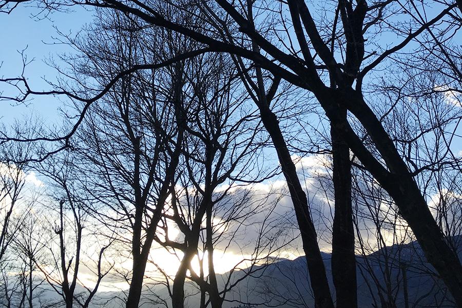 トルーマン・カポーティの奇妙な冒険/カポーティ「夜の樹」