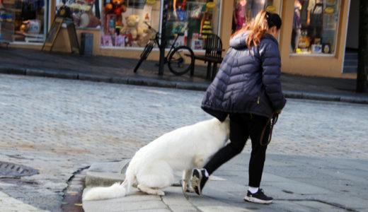 村井理子「犬がいるから」/ブレイディみかこ「花の命はノー・フューチャー: DELUXE EDITION (ちくま文庫)」
