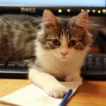 ボブという名の猫茶トラの強き猫/映画「ボブという名の猫 幸せのハイタッチ(原題 A Street Cat Named Bob)」
