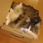 ネコ型のピザが届いた食えないよ/片桐はいり「わたしのマトカ」