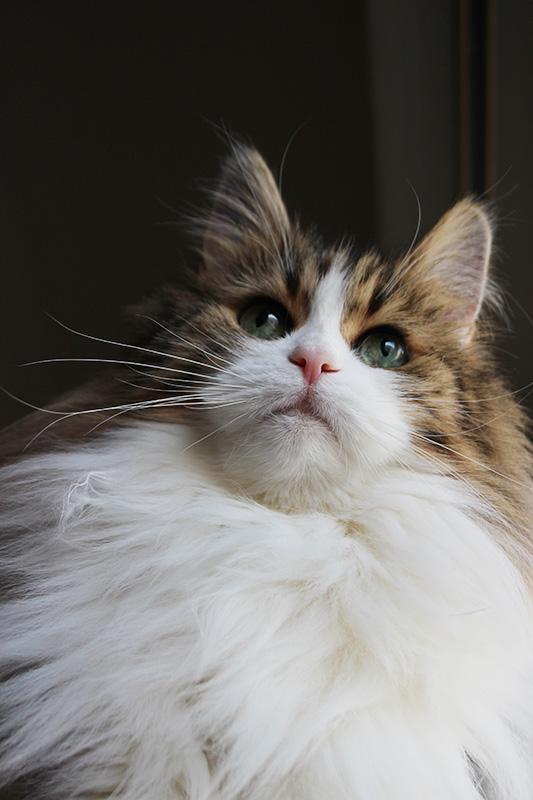 今朝の猫緊急地震速報と