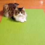 日本女子カーリング 世界選手権銀メダル!/チーム藤澤五月の悔し涙と勝利の歌