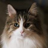 小寒や窓辺の猫の神々し/副島隆彦 佐藤優「ウイルスが変えた世界の構造」