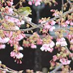 袴着の荷物の多し春霙