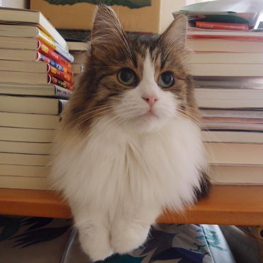 紫木蓮「毎日かあさん」一気読み/西原理恵子「毎日かあさん」