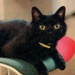 ヒグマてふ黒猫のあり春はじむ
